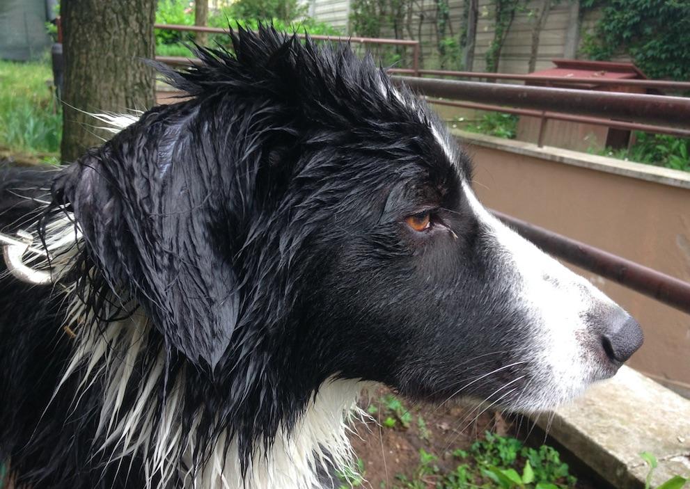 Lucky punk dopo una doccia
